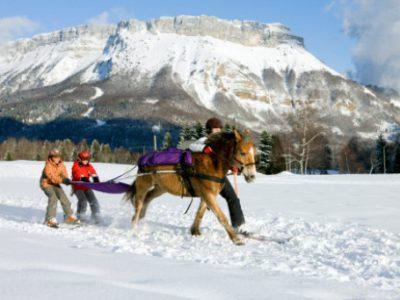 ski-cheval-montagne